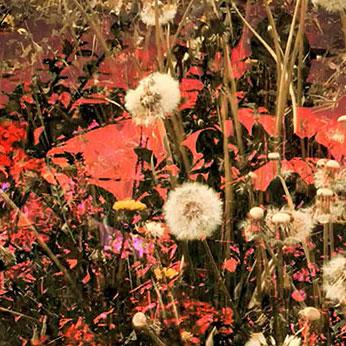 Irene Naef - sentiero fiorito